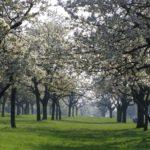 Весна приходит в Чехию