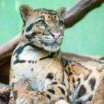 Путешествие по Пражскому зоо… пражский зоопарк и дети